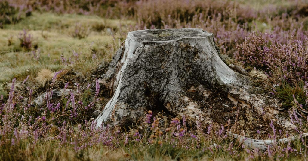 Garden Stump in need of Grinding