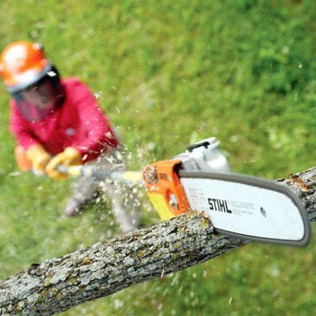 Pole Chainsaw Cutting a Branch